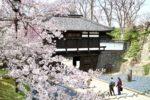 懐古園『桜祭り』