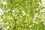 (日本語) 新緑の季節